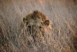 How Safaris Work