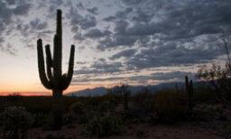 The Ultimate Saguaro National Park Quiz