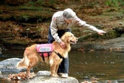 How Search-and-rescue Dogs Work
