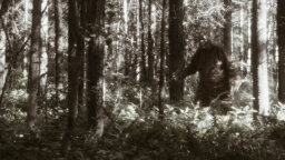 What's the Difference Between Sasquatch and Bigfoot?