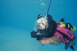 How could a cat scuba dive?