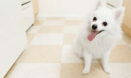 How to Care For a Dog's Dry Skin