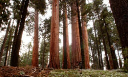 The Ultimate Sequoia & Kings Canyon National Parks Quiz