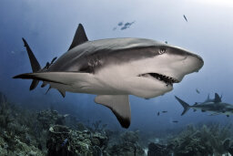 How Sharks Work