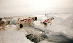Are sled dogs a help or hindrance in the Alaskan wilderness?