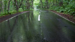 What Causes Petrichor, the Earthy Smell After Rain?