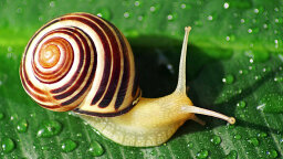 How Do Snails Get Their Shells?