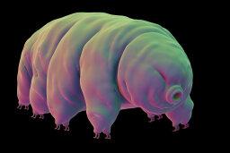How Tardigrades Work