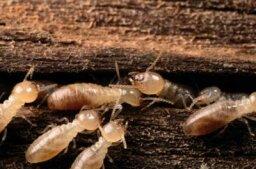 How Termites Work