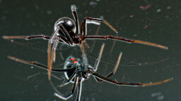 10 Amazing, Beautiful, TERRIFYING Spiders