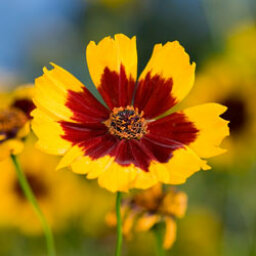 Top 5 Perennials for the South