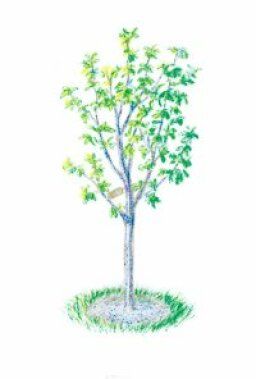 Tips for Growing Flowering Trees