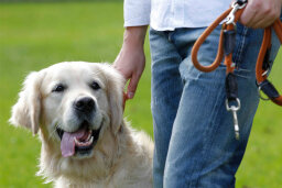 Could a wearable device help you train your dog?