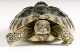 Can a Turtle Outgrow Its Shell?