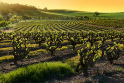 Ultimate Guide to Ohio Wine Country