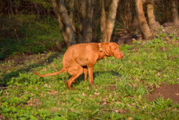 Home Remedies for Dogs With Worms