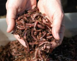 How Vermicomposting Works