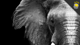 Stuff to Blow Your Mind: Elephants, Death and Empathy [VIDEO]