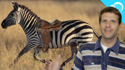 Why don't humans ride zebras? [VIDEO]
