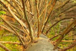 Twig Molding