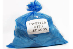Can you wash bed bugs out of clothes?