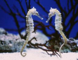 10 Weird Ways Organisms Reproduce