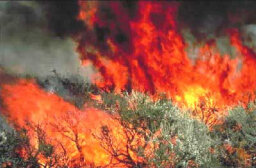 How do investigators determine if a wildfire was caused by arson?