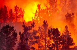 What if a wildfire came near my house?