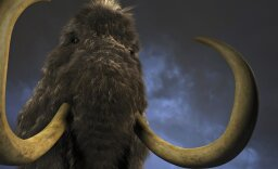 How Woolly Mammoths Worked