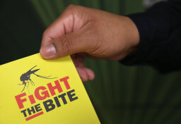 Quiz: Zika Facts Among Rumors, Myths and Conspiracy Theories