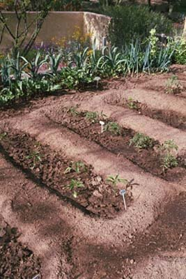 Straight lines help you tell the difference between plants and weeds.