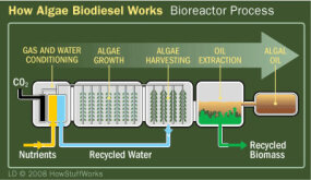 How Algae Biodiesel Works: Bioreactor Process