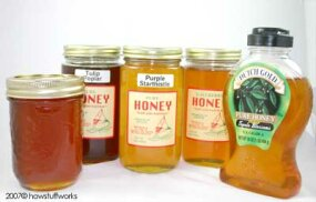 These honeys come from flowering plants that grow in the southeastern United States. The variations in color come from the different types of nectar the bees harvested to make the honey.