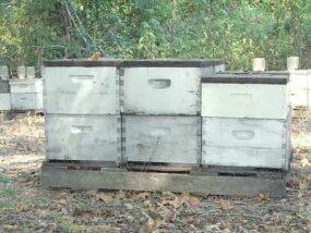 Langstroth bee hives