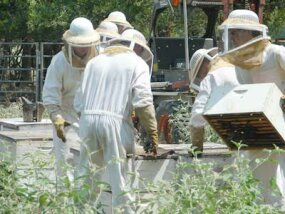 Beekeepers harvesting honey