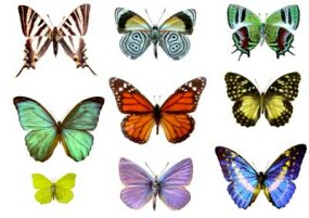 Iridescence in Butterfly Wings | HowStuffWorks