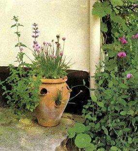 Kitchen Garden Ideas | HowStuffWorks