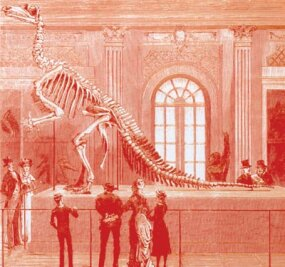 Iguanodon skeleton on display at the Brussels Museum in 1883