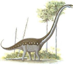 Omeisaurus tianfuensis, Family Euhelopodidae