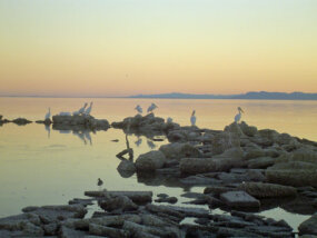 The Salton Sea was created by an environmental disaster but now takes in irrigation runoff and hosts a variety of wildlife.