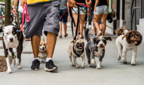 dog walker in new york
