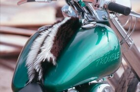 Fat Bob tank wears a skunk pelt in lieu of its usual instrument panel -- a fair trade in the world of choppers.