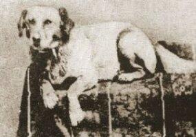 fido, lincoln's dog, portrait