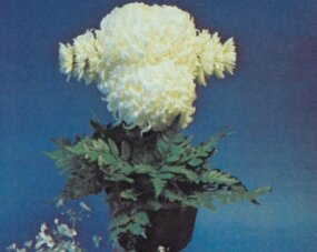 Two large mums create the poodle's head.                              Ears are small mums wired together.
