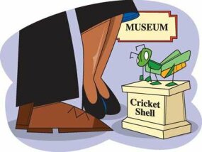 Create your own cricket molting museum.