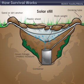 A solar still can help you collect drinking water.