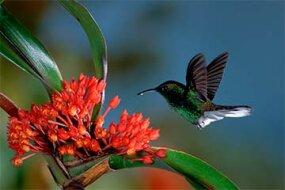 hummingbird, orchid