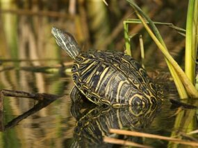 Turtles and other long-lived creatures are the subjects of much scientific research.