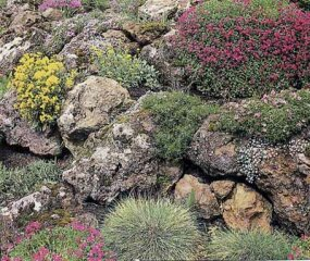 Traditional Rock And Alpine Garden Ideas Howstuffworks