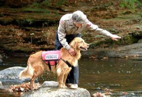 Air-scent dogs pick up human scent carried in air currents.